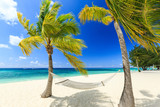 Hammock and palm trees at 7 mile beach, Grand Cayman - 74545040