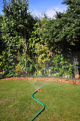 Garden lawn being watered