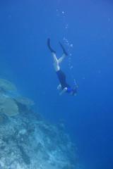 Schnorcheln am Korallenrif