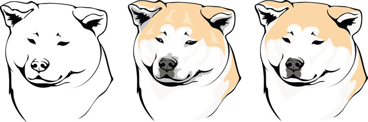 head dog breed Akitas