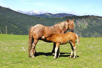 Picturesque nature landscape with horse and foal.