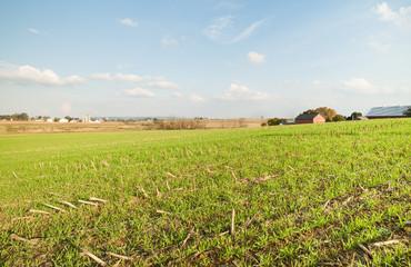 American rural landscape, after the corn harvest