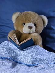 A teddy bear reading a book