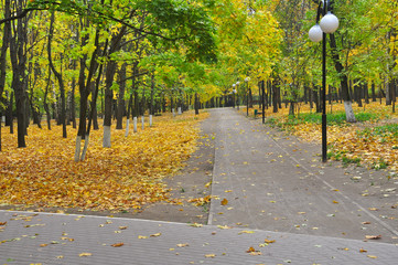 Autumn Park at the time of defoliation.