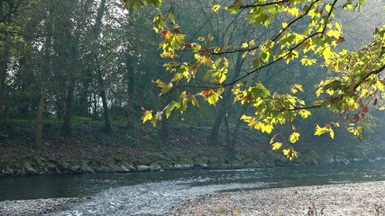 Autumn in the park among yellow leaves and flowing river