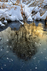 Tree reflected in water at sunset in winter