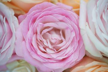 Розы в букете крупным планом