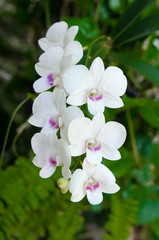 Close up of beautiful orchid