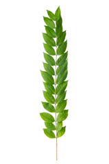 Close up of green leaves on white background