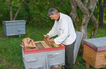 Ukrainian beekeeper inspecting the beehive