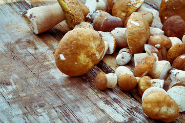 Mushrooms cepes on wooden background