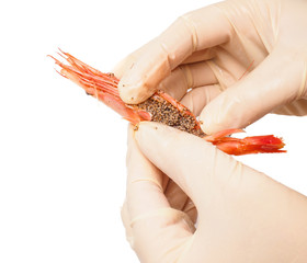 Hands wearing rubber gloves peeling pink boiled shrimp isolated