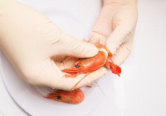Hands peeling boiled pink shrimp with white rubber gloves