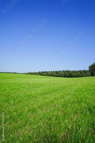 canvas print picture Hügelige , große Wiese mit Wald im Hintergrund