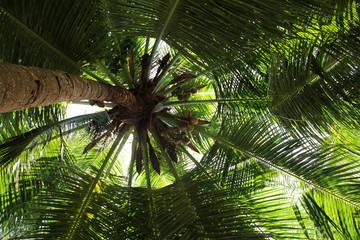 Palm tree crown dark firmament