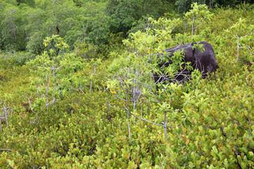 Tropical Rainforest in Seychelles