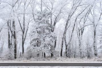 Winter landscape, frozen trees