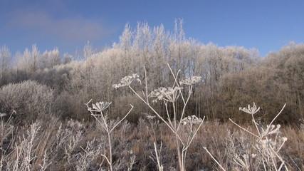 beautiful winter landscape and hoarfrost rime