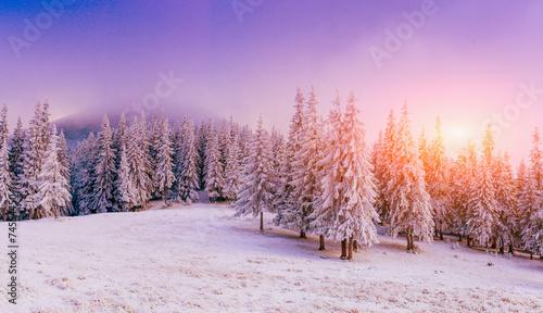 Keuken foto achterwand Bossen magical winter snow covered tree