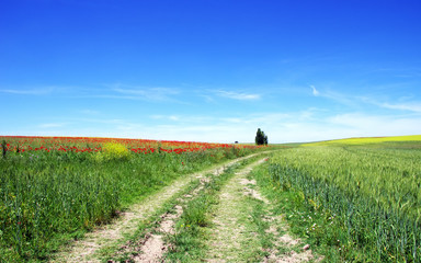 Road in Alentejo field