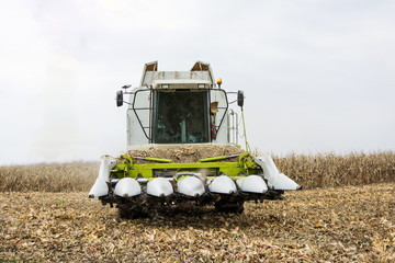 Corn harvest with combain