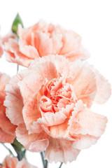 Clove. Beautiful flower on light background