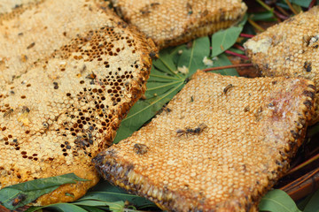Honeycomb on a banana leaf in market