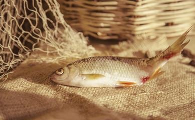 Пойманая рыба