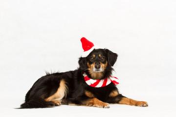 Hund mit Weihnachtsmütze