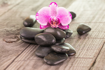 Fuchsia Moth orchid and black stones close-up