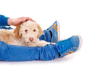 Hund liegt zwischen Beinen