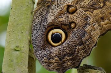 papillon dans une bambouseraie