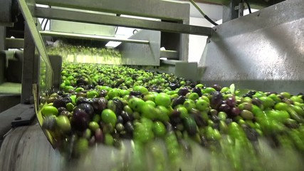 Washing Olives (3)
