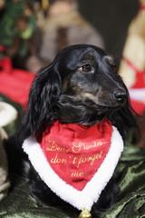 dog wishes Christmas greetings