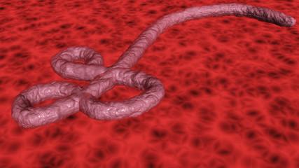 African ebola virus