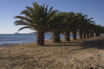 Playa del morrongo de Benicarló 6