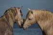 Obrazy na płótnie, fototapety, zdjęcia, fotoobrazy drukowane : Horse talk