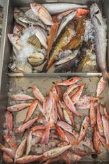 Fresh fish on Greek island Kalymnos local market