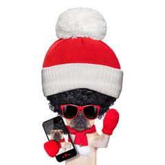 wig selfie dog