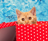 Cute kitten look out of the red gift box on blue frosty pattern