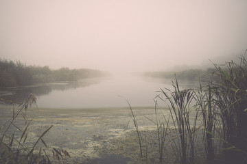 swamp view with lakes and footpath - retro, vintage
