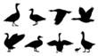 goose silhouettes - 74579045