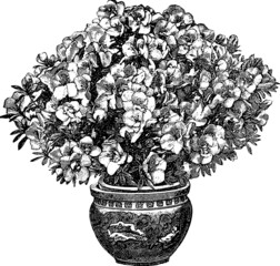 Vintage graphic flower azalea