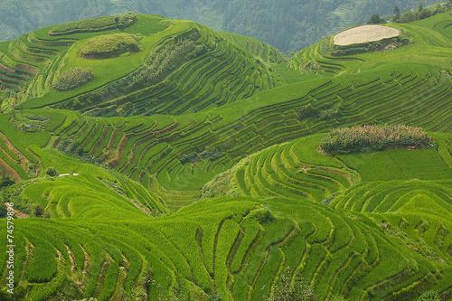Foto op Canvas Heuvel Longji rice fields, Dragon Hill. Ping'an, China
