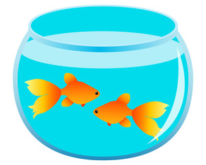 Pair of gold fish in the aquarium. Vector illustration