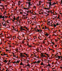 red leaves seamless background