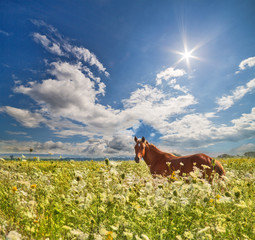 brown horse in wild flowers under sun