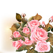 Beautiful vector roses painted in watercolor vintage style