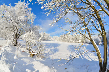 Winter Landschaft Baum Sonne