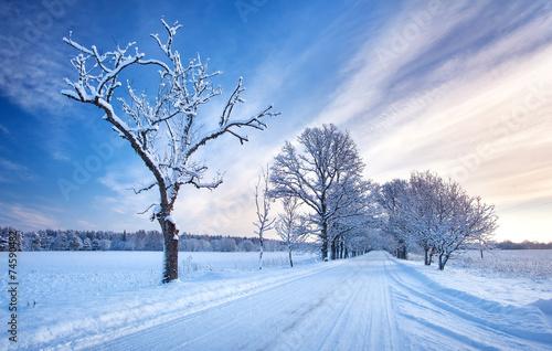 Leinwanddruck Bild Snowy alley in the winter